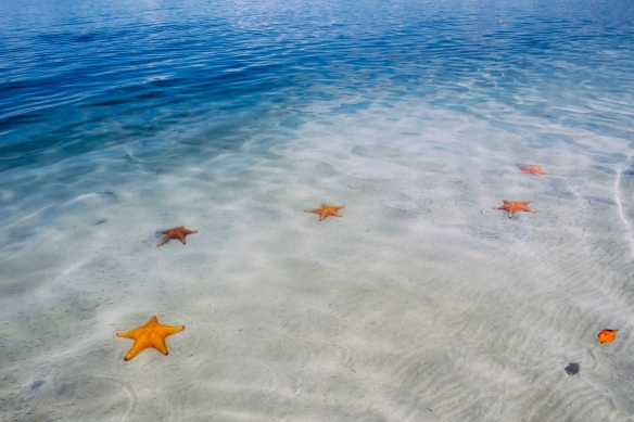 Starfish Beach Photo by Charles Aydlett Photography