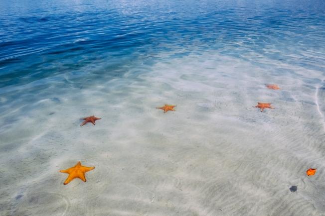 Starfish Beach by Charles Aydlett Photography